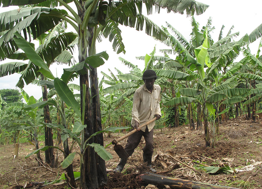 - develop and implement livelihood and restoration program